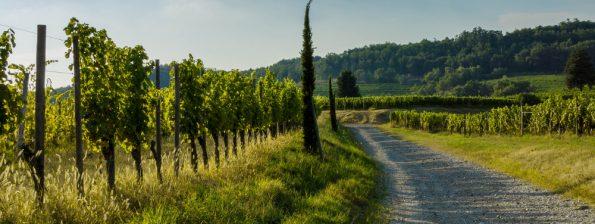 wijnreis italie