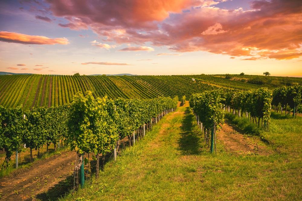 De leukste gebieden voor een wijnvakantie